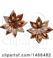 Clipart Of A Sketched Herb Star Anise Royalty Free Vector Illustration