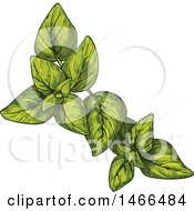 Clipart Of A Sketched Herb Oregano Royalty Free Vector Illustration