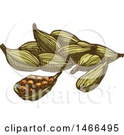 Clipart Of A Sketched Spice Cardamon Royalty Free Vector Illustration