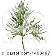Clipart Of A Sketched Herb Dill Royalty Free Vector Illustration