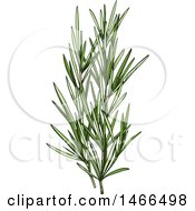 Clipart Of A Sketched Herb Rosemary Royalty Free Vector Illustration