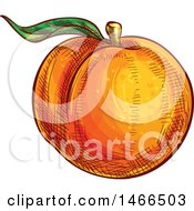 Clipart Of A Sketched Peach Royalty Free Vector Illustration