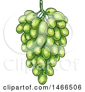 Clipart Of A Sketched Bunch Of Green Grapes Royalty Free Vector Illustration
