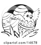 Baby Chicken Hatching Out Of A Decorated Easter Egg Black And White Clipart Illustration