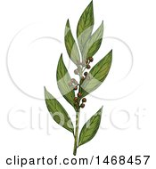 August 16th, 2017: Clipart Of A Sketched Herb Bay Leaves Royalty Free Vector Illustration by Vector Tradition SM