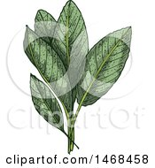 Clipart Of A Sketched Herb Sage Royalty Free Vector Illustration