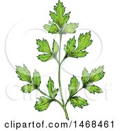 Clipart Of A Sketched Herb Parsley Royalty Free Vector Illustration