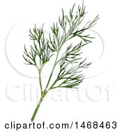 Sketched Herb Dill