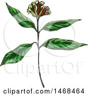 Clipart Of A Sketched Herb Clove Plant Royalty Free Vector Illustration