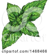 Clipart Of A Sketched Herb Peppermint Royalty Free Vector Illustration by Vector Tradition SM
