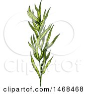 Clipart Of A Sketched Herb Tarragon Royalty Free Vector Illustration