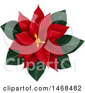 Red Poinsetta Flower