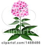 Phlox Plant