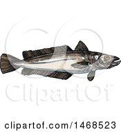 Sketched Hake Fish