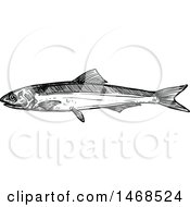 Sketched Black And White Anchovy Fish