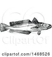 Sketched Black And White Hake Fish