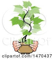 Clipart Of A Pair Of Hands Holding A Potted Grape Vine Royalty Free Vector Illustration