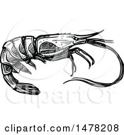 Sketched Black And White Shrimp