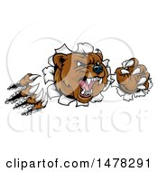 Clipart Of A Mad Grizzly Bear Mascot Breaking Through A Wall Royalty Free Vector Illustration