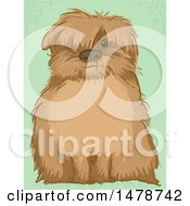 Shaggy Dog With Text Space On His Belly