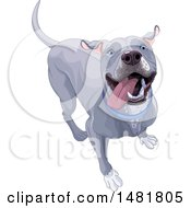 Clipart Of A Cute Happy Blue Or Silver Pitbull Dog Royalty Free Vector Illustration