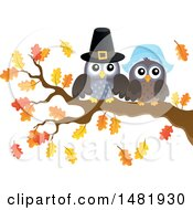 Clipart Of A Thanksgiving Pilgrim Owl Couple On A Fall Tree Branch Royalty Free Vector Illustration