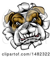Clipart Of A Mad Bulldog Breaking Through A Wall Royalty Free Vector Illustration