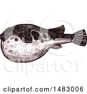 Clipart Of A Sketched Blowfish Royalty Free Vector Illustration