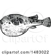 Sketched Black And White Blowfish