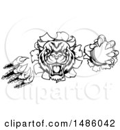 Clipart Of A Black And White Vicious Wildcat Mascot Shredding Through A Wall With A Cricket Ball Royalty Free Vector Illustration