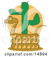 Rattlesnake Holding Out His Rattle And Curled Around A Desert Cactus