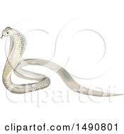 Clipart Of A Beautiful White Indian Cobra Royalty Free Vector Illustration by dero
