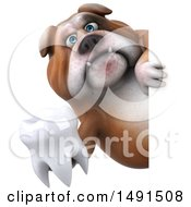 Clipart Of A 3d Bill Bulldog Mascot Holding A Tooth On A White Background Royalty Free Illustration