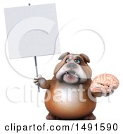 Clipart Of A 3d Bill Bulldog Holding A Brain On A White Background Royalty Free Illustration