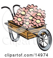 Old Fashioned Wooden Wheelbarrow With Pretty Pink And White Daisy Flowers On Easter