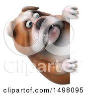 3d Bulldog Looking Around A Sign On A White Background