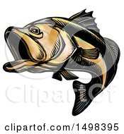 Largemouth Bass Fish In Sketch Style On A White Background
