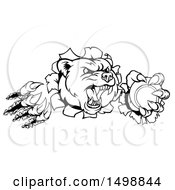 Clipart Of A Black And White Bear Mascot Slashing Through A Wall With A Tennis Ball In A Paw Royalty Free Vector Illustration