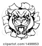 Clipart Of A Black And White Roaring Panther Mascot Breaking Through A Wall Royalty Free Vector Illustration