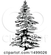 Snow Flocked Evergreen Tree