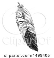 Clipart Of A Feather With A Sea Eagle On A White Background Royalty Free Illustration