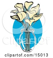 Bunch Of Cream Calla Lilies In A Clear Glass Vase Over A Blue Oval On Easter