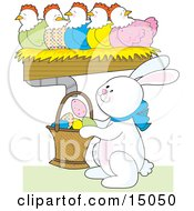 Busy White Easter Bunny Holding A Basket Under A Row Of Colorful Chickens Laying Decorated Eggs