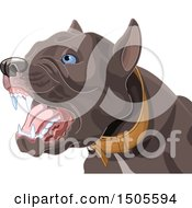 Clipart Of A Barking Aggressive Pit Bull Dog Royalty Free Vector Illustration