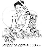 Clipart Of A Black And White Sri Lankan Lady Tea Plucking Royalty Free Vector Illustration
