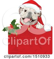 Clipart Of A Cute Bulldog Popping Out Of A Christmas Gift Box Royalty Free Vector Illustration