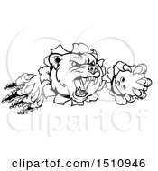 Clipart Of A Black And White Vicious Aggressive Bear Mascot Slashing Through A Wall With A Bowling Ball In A Paw Royalty Free Vector Illustration by AtStockIllustration