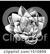 Clipart Of A Woodcut Blooming Waterlily Lotus Flower On Black Royalty Free Vector Illustration by AtStockIllustration