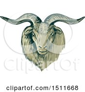 Clipart Of A Sketched Cashmere Goat Head Royalty Free Vector Illustration by patrimonio