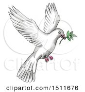 Sketched And Watercolor Peace Dove Flying With A Branch On A White Background